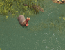 hippo1.png